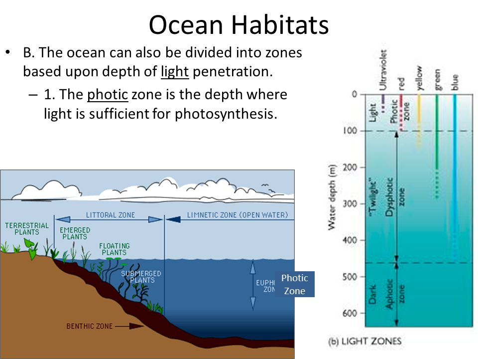 Ocean Habitats B. The ocean can also be divided into zones based upon depth of light penetration.