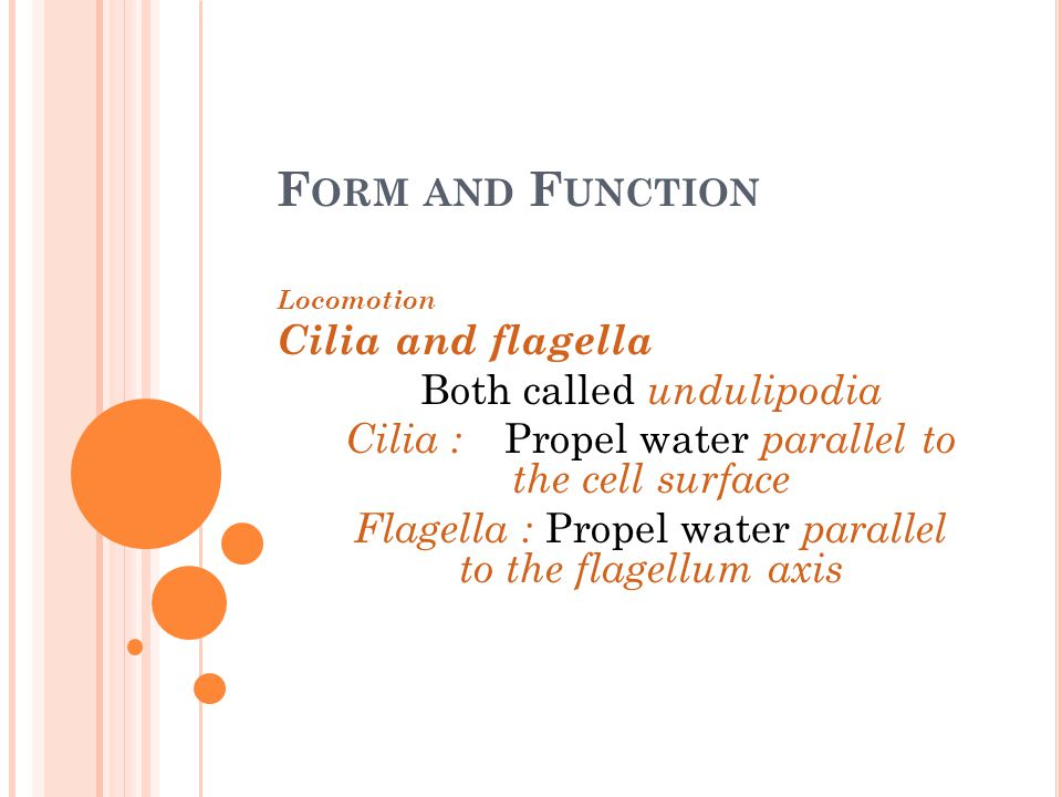 Form and Function Cilia and flagella Both called undulipodia