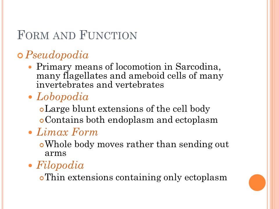 Form and Function Pseudopodia Lobopodia Limax Form Filopodia