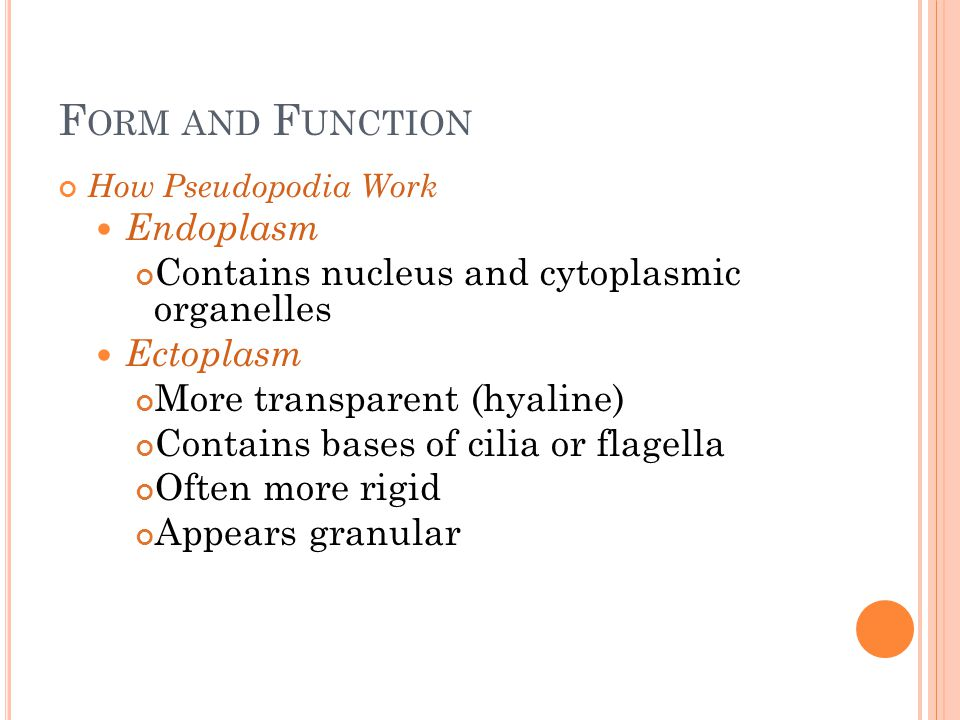Form and Function Endoplasm