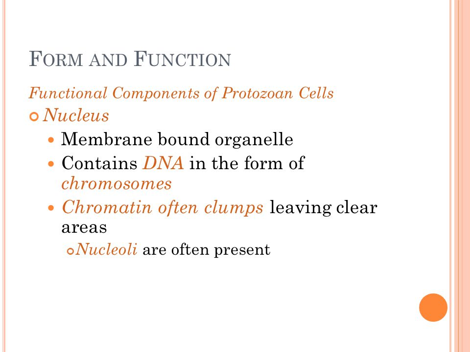 Form and Function Nucleus Membrane bound organelle