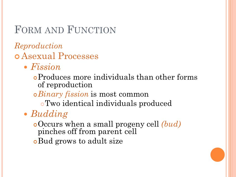 Form and Function Asexual Processes Fission Budding Reproduction