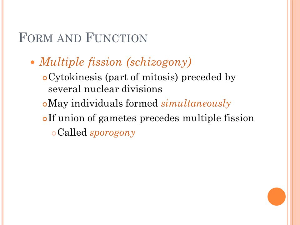Form and Function Multiple fission (schizogony)