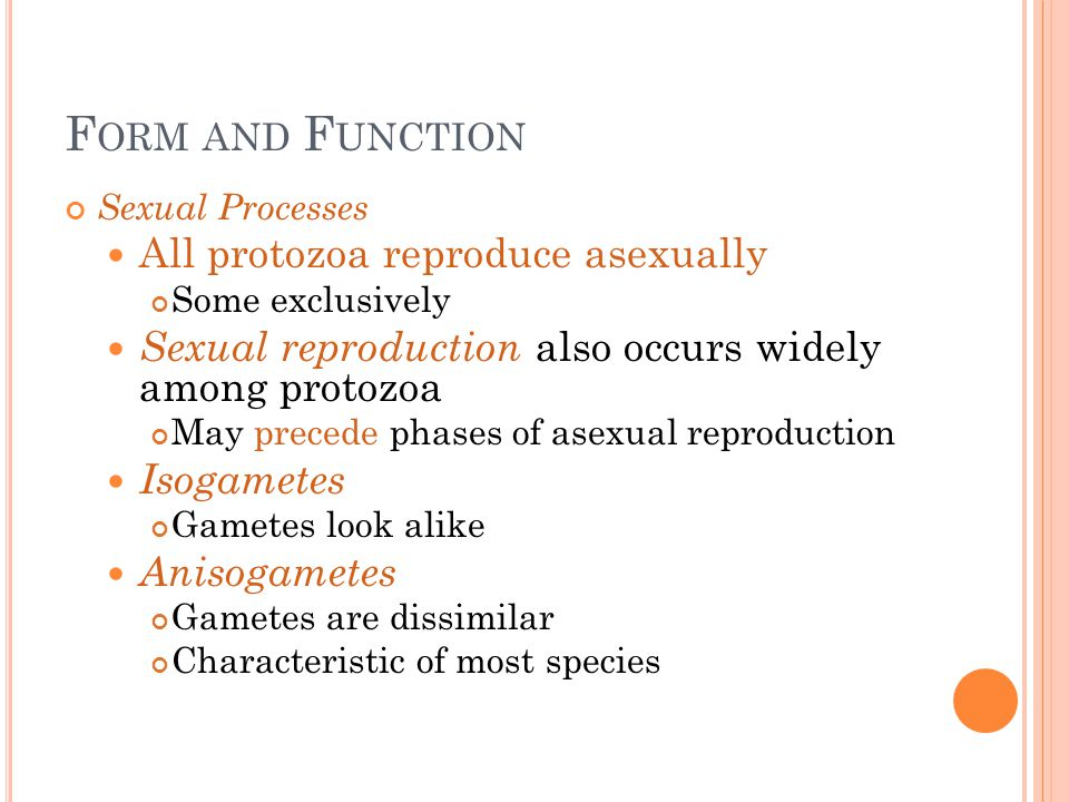 Form and Function All protozoa reproduce asexually