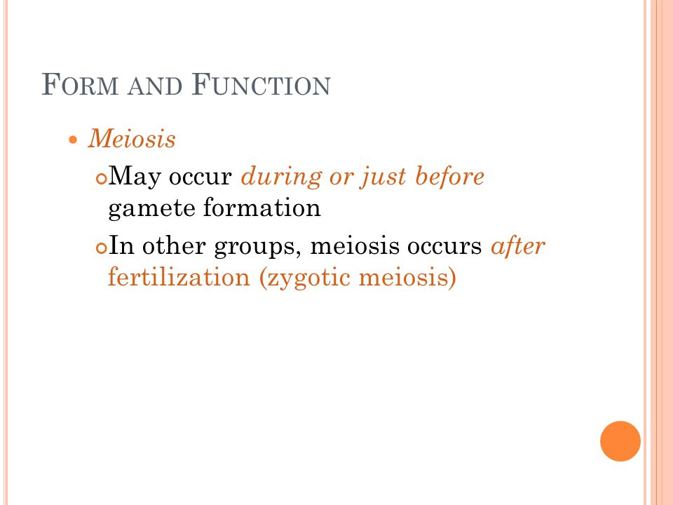 Form and Function Meiosis