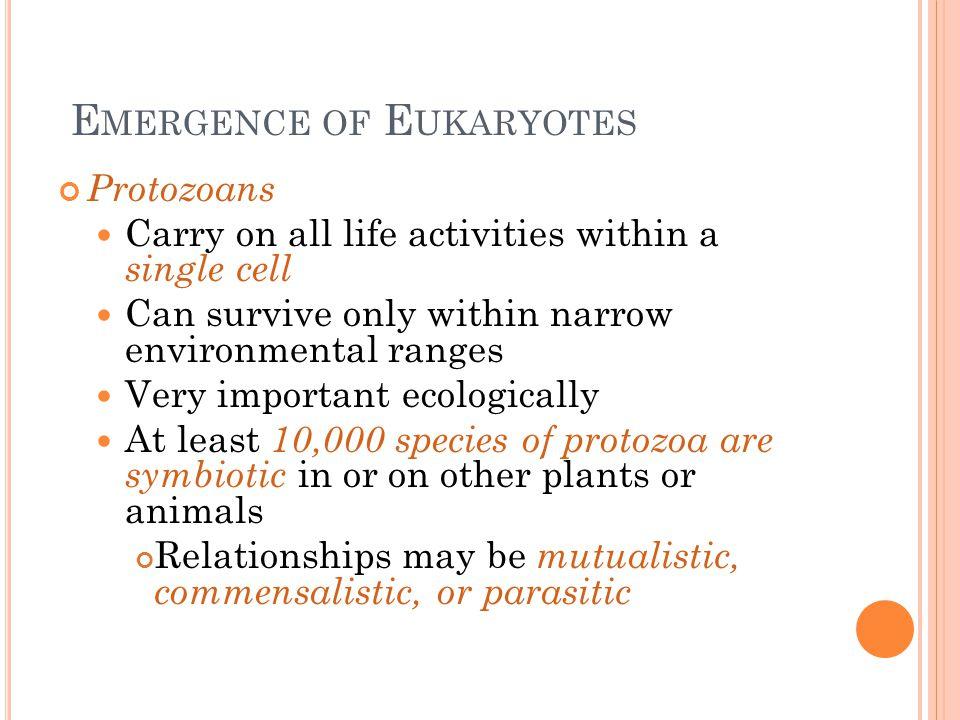 Emergence of Eukaryotes