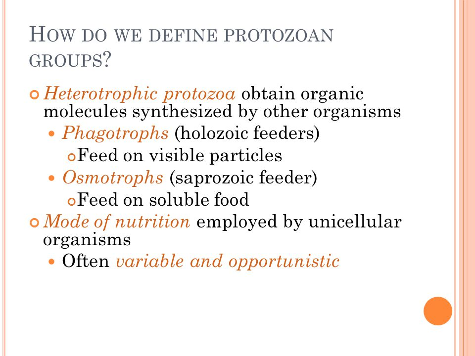 How do we define protozoan groups