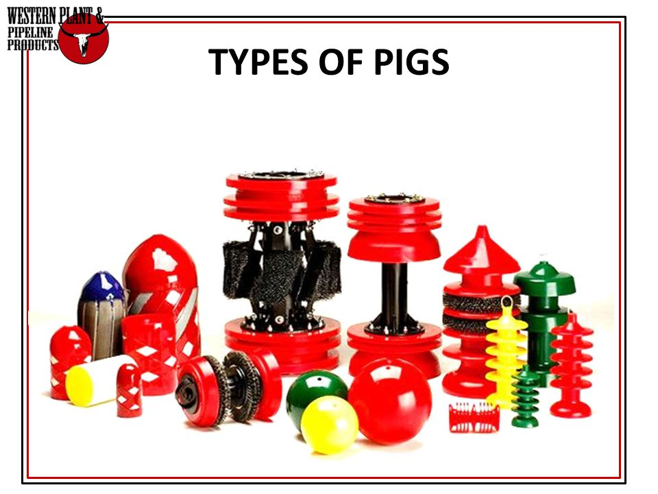 TYPES OF PIGS