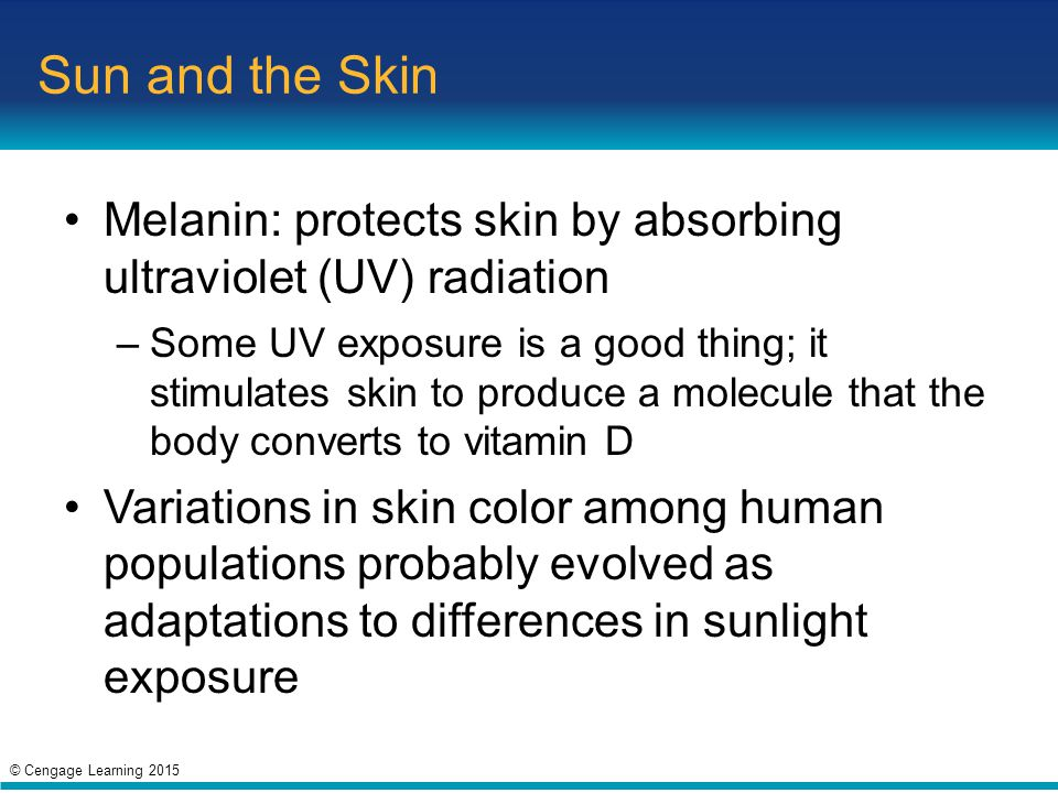 Sun and the Skin Melanin: protects skin by absorbing ultraviolet (UV) radiation.
