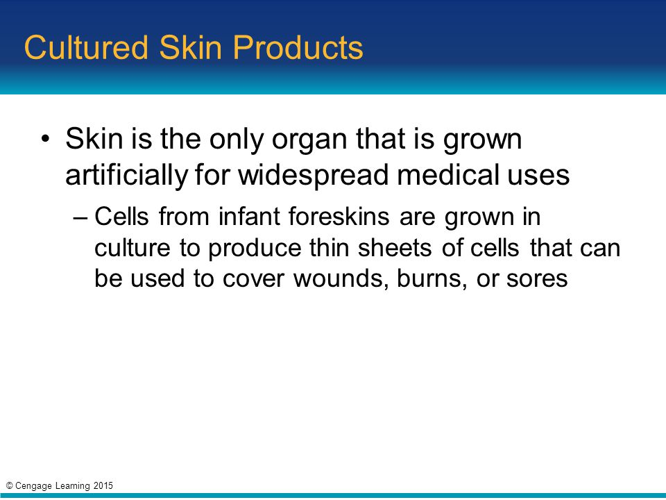 Cultured Skin Products