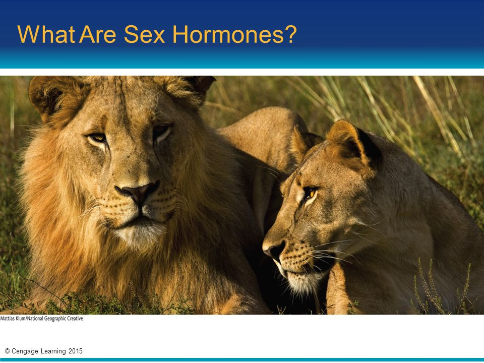 What Are Sex Hormones