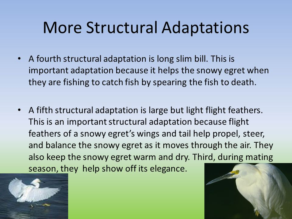 More Structural Adaptations