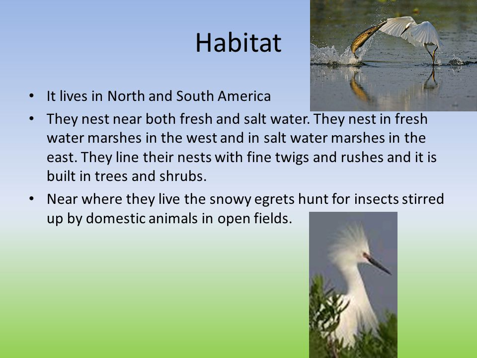 Habitat It lives in North and South America