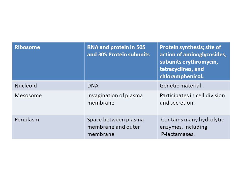 Ribosome RNA and protein in 50S and 30S Protein subunits. Protein synthesis; site of action of aminoglycosides,