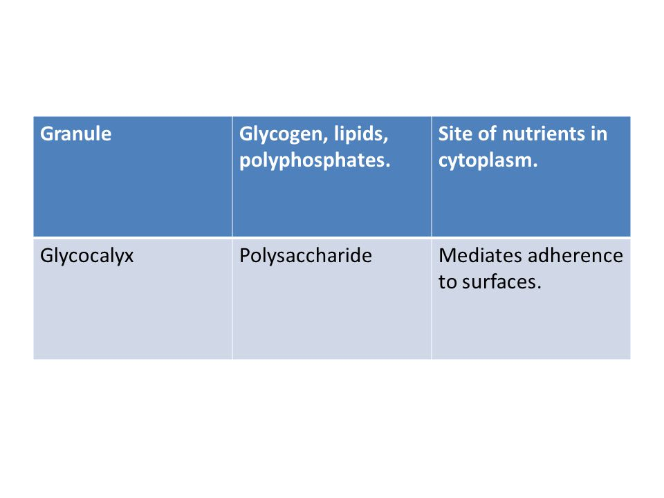 Granule Glycogen, lipids, polyphosphates. Site of nutrients in cytoplasm. Glycocalyx. Polysaccharide.