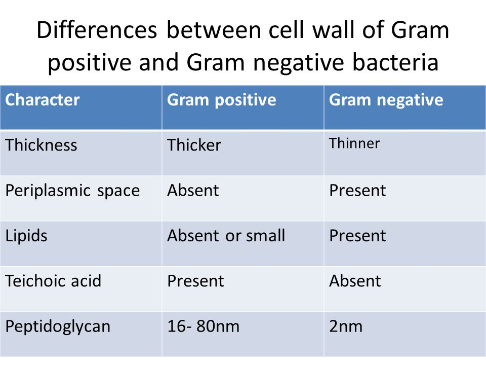 Differences between cell wall of Gram positive and Gram negative bacteria