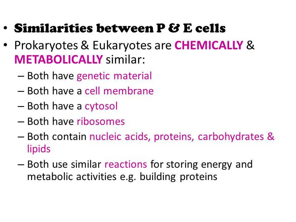 Similarities between P & E cells