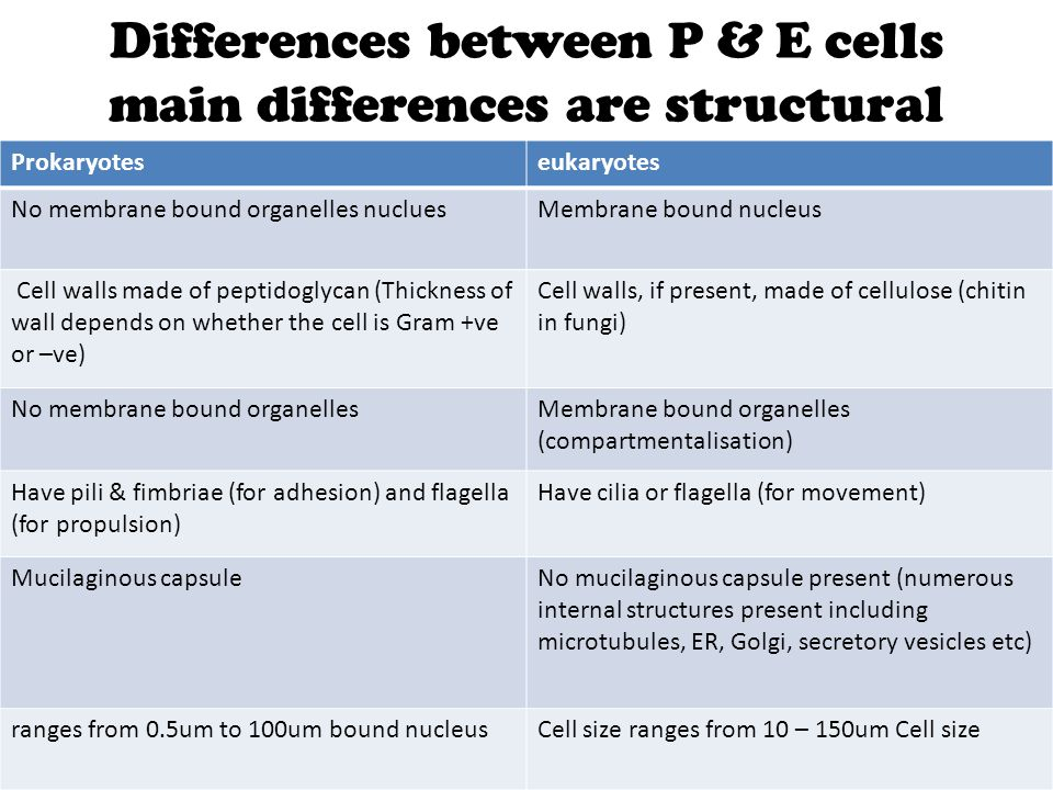 Differences between P & E cells main differences are structural
