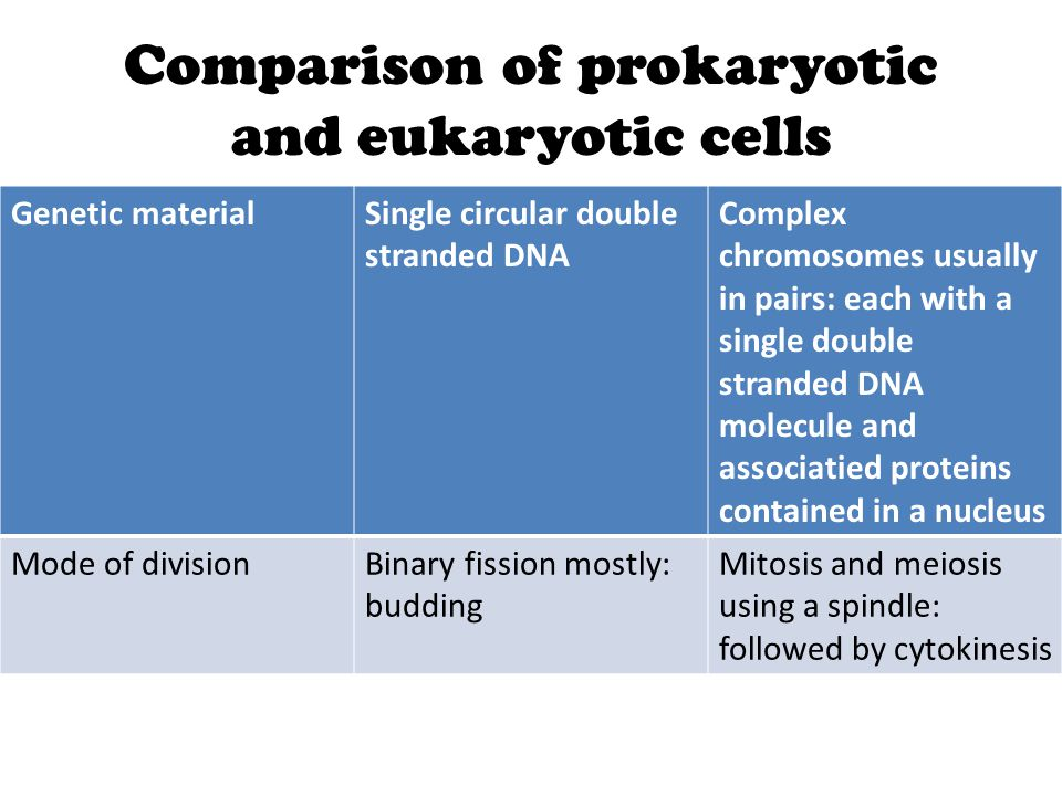 Comparison of prokaryotic and eukaryotic cells