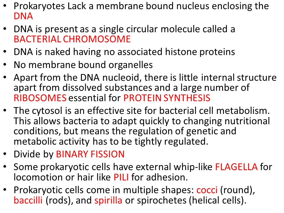 Prokaryotes Lack a membrane bound nucleus enclosing the DNA