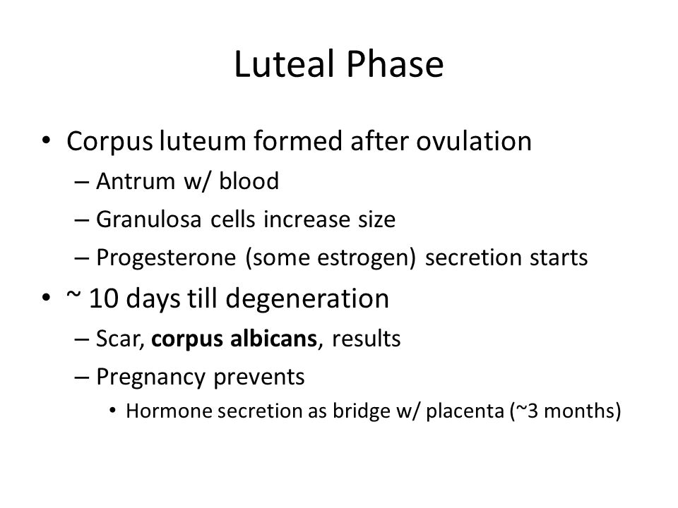 Luteal Phase Corpus luteum formed after ovulation
