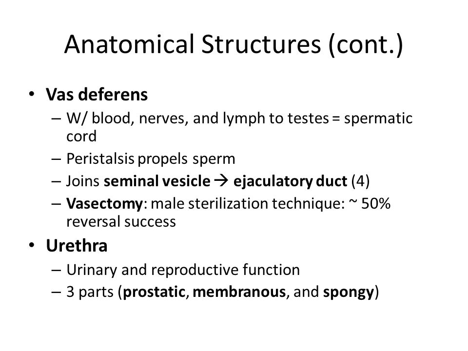 Anatomical Structures (cont.)