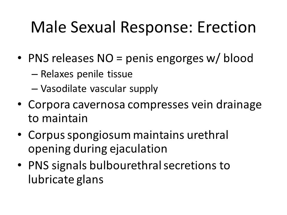 Male Sexual Response: Erection