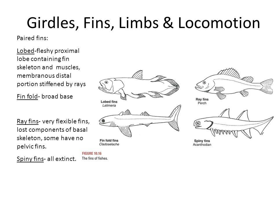 Girdles, Fins, Limbs & Locomotion