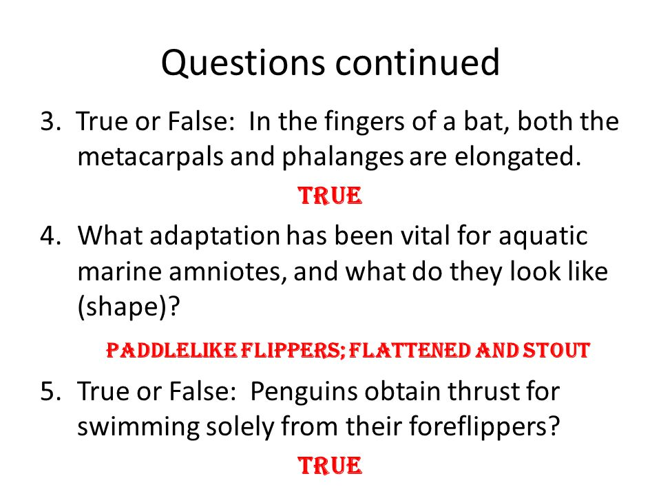 Questions continued 3. True or False: In the fingers of a bat, both the metacarpals and phalanges are elongated.