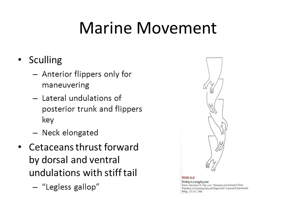 Marine Movement Sculling