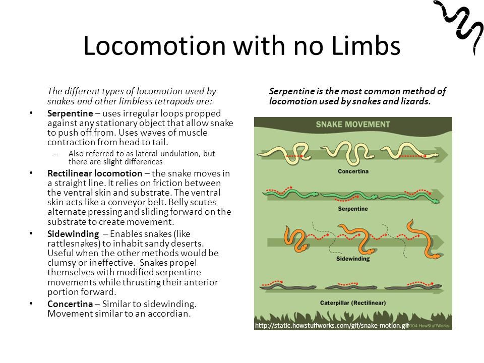 Locomotion with no Limbs