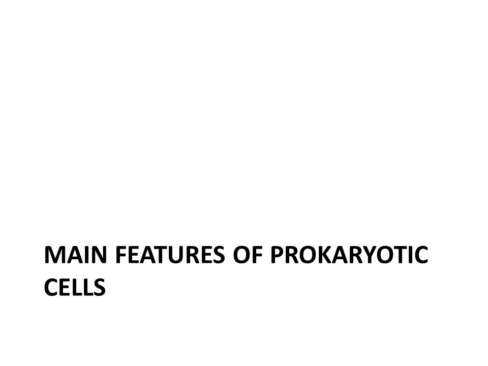 Main features of prokaryotic cells