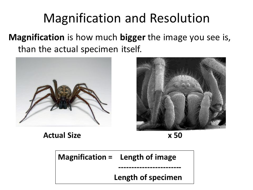 Magnification and Resolution