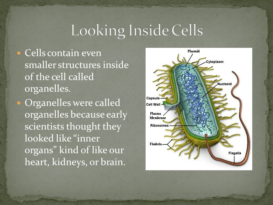 Looking Inside Cells Cells contain even smaller structures inside of the cell called organelles.