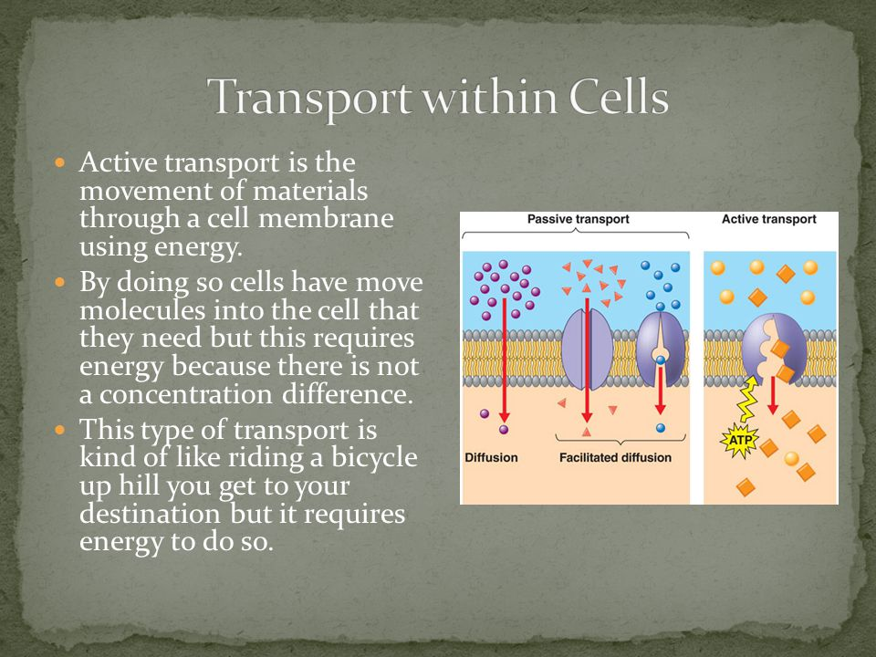 Transport within Cells