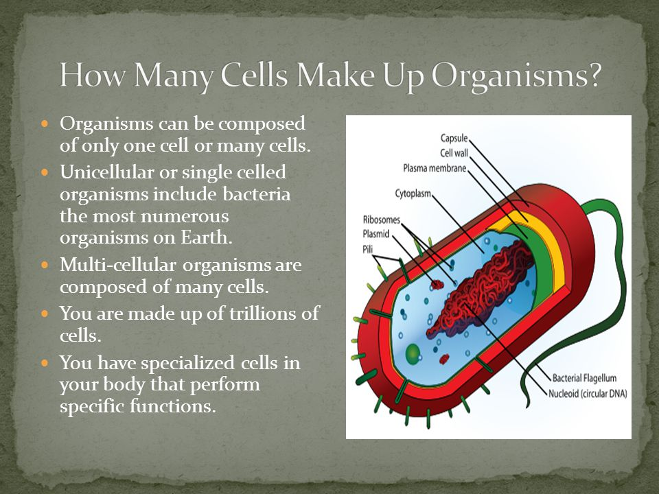 How Many Cells Make Up Organisms