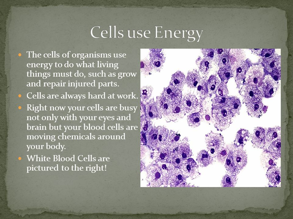 Cells use Energy The cells of organisms use energy to do what living things must do, such as grow and repair injured parts.