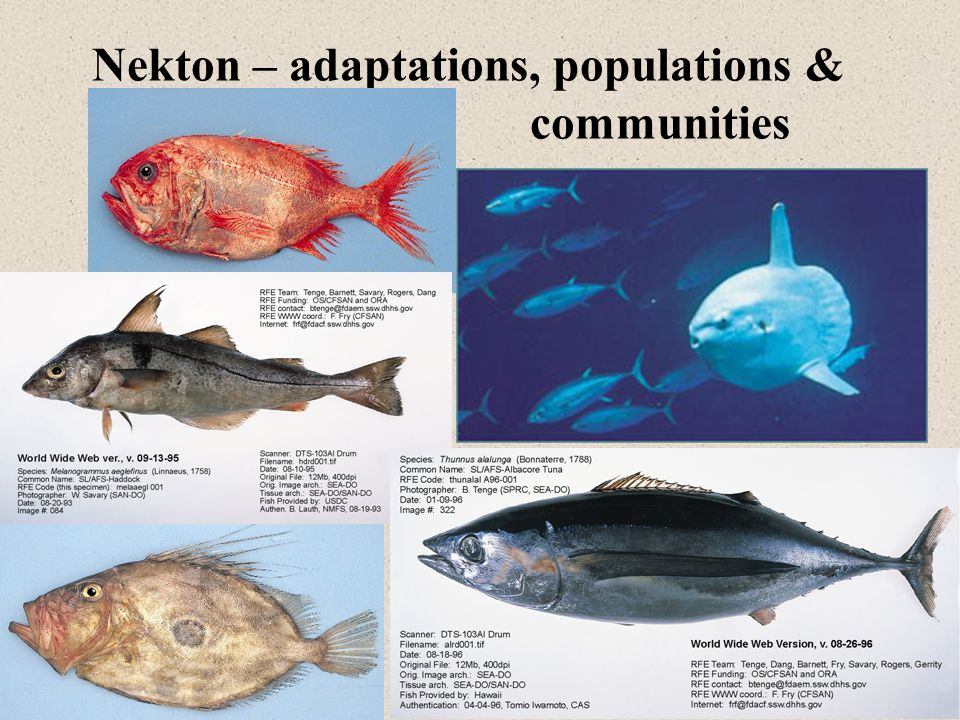 Nekton – adaptations, populations & communities