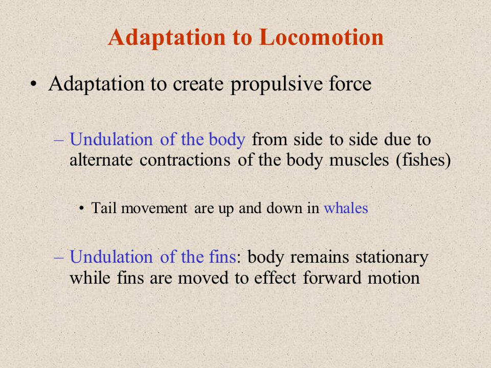 Adaptation to Locomotion