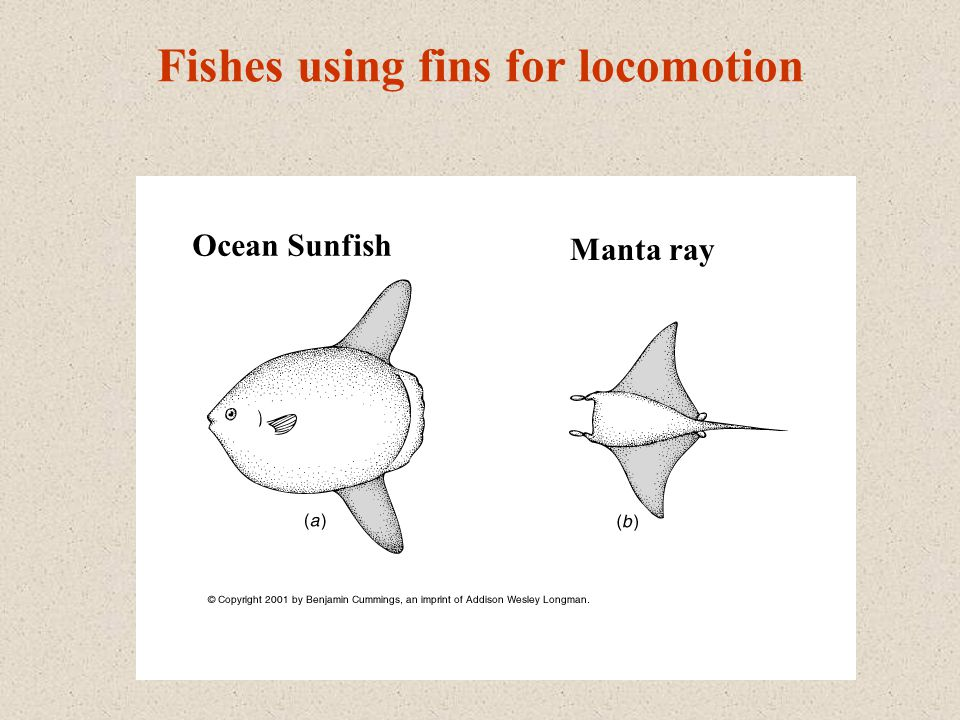 Fishes using fins for locomotion