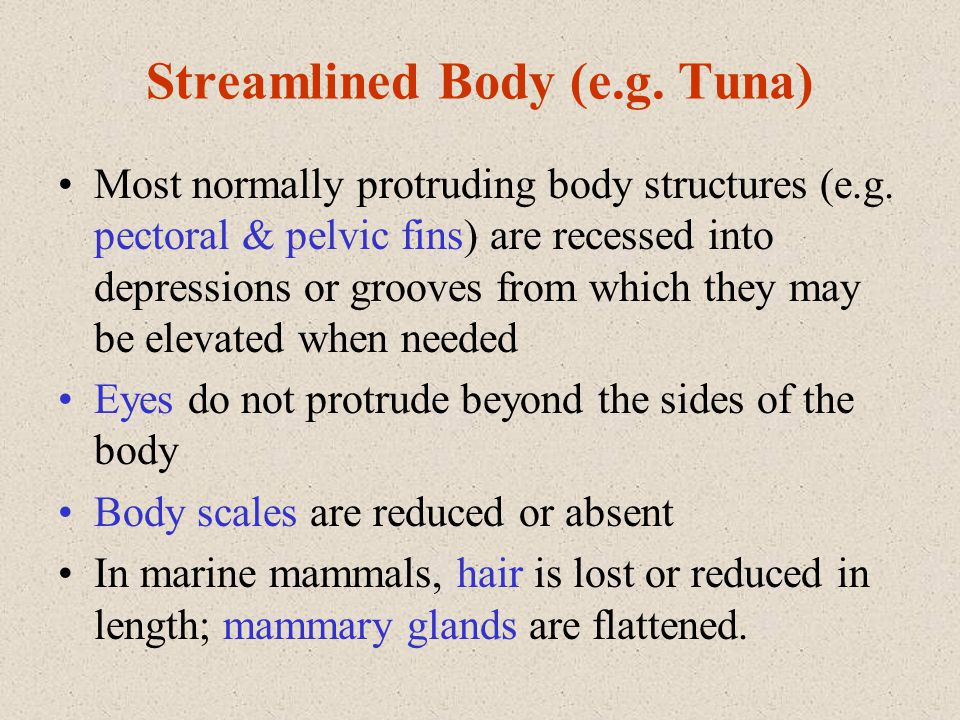 Streamlined Body (e.g. Tuna)