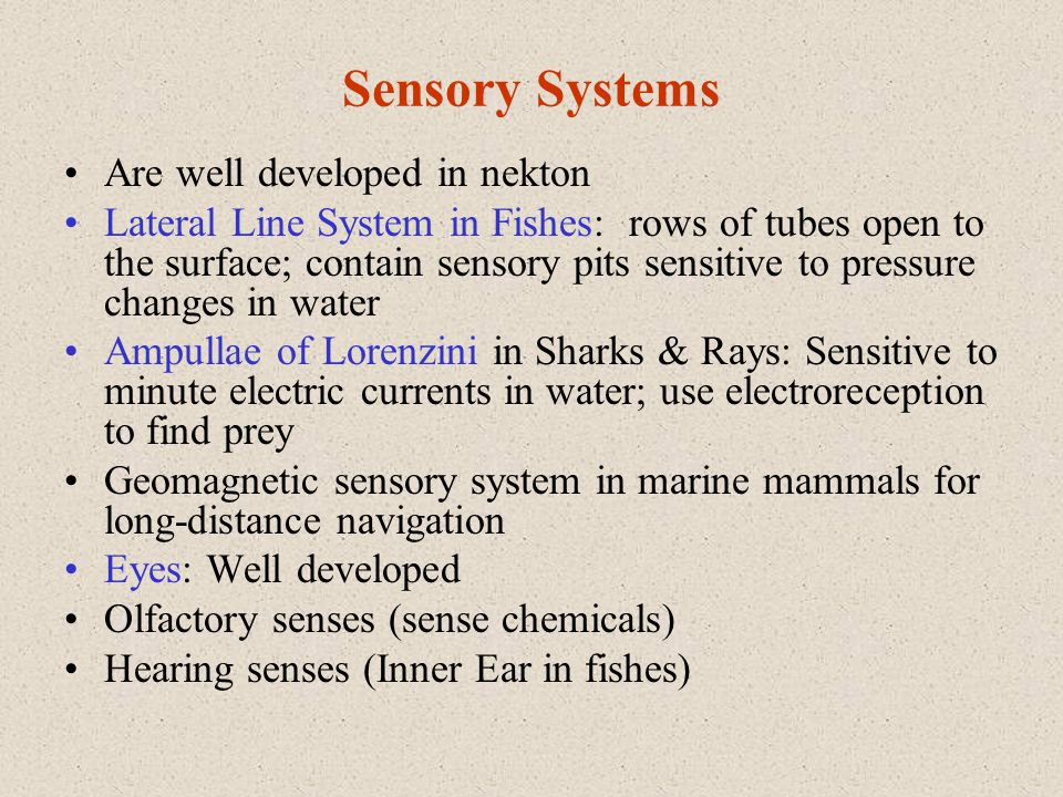 Sensory Systems Are well developed in nekton