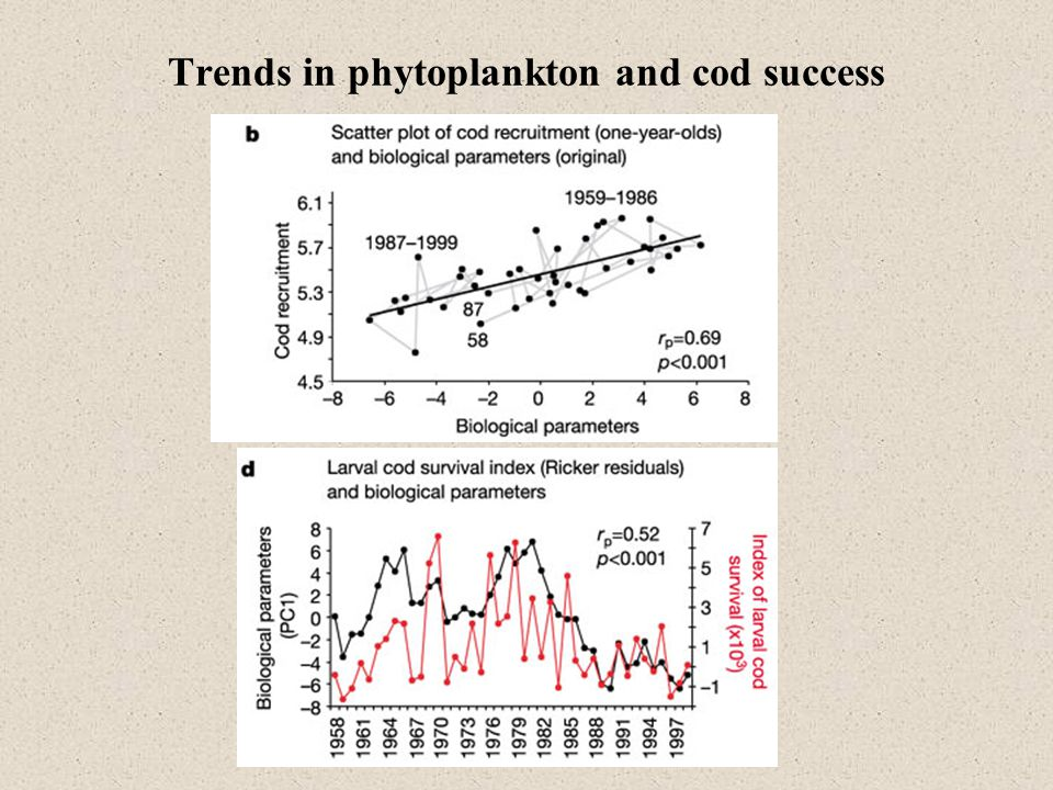 Trends in phytoplankton and cod success
