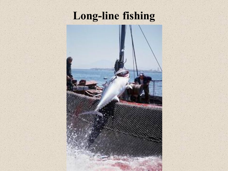 Long-line fishing