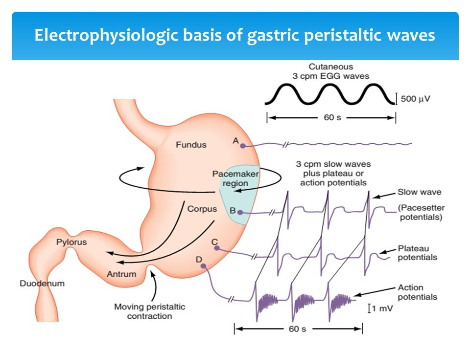 Electrophysiologic basis of gastric peristaltic waves