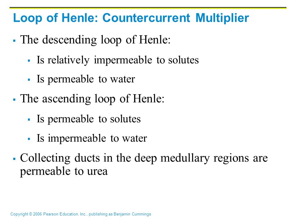 Loop of Henle: Countercurrent Multiplier