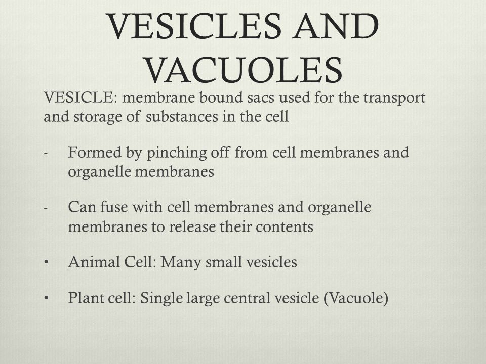 VESICLES AND VACUOLES VESICLE: membrane bound sacs used for the transport and storage of substances in the cell.