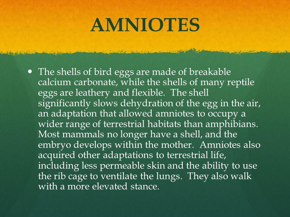 AMNIOTES