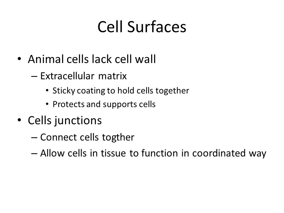 Cell Surfaces Animal cells lack cell wall Cells junctions