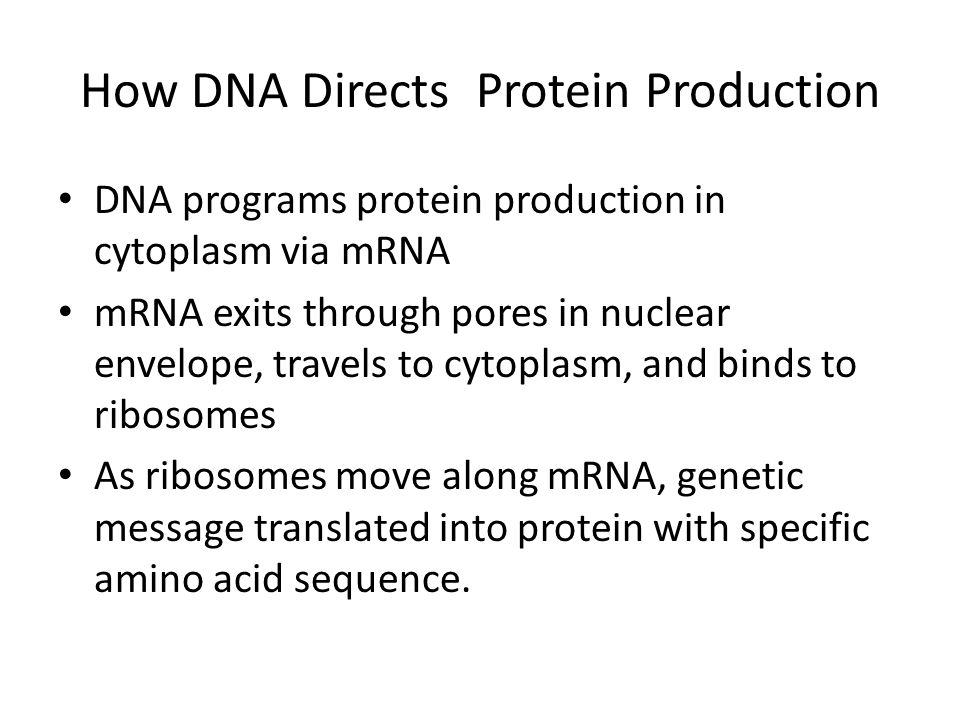 How DNA Directs Protein Production